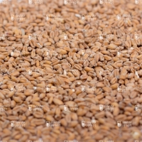 Soufflet Wheat